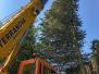 Arboricultural Lifting