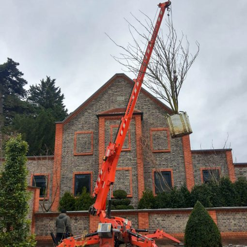 Landscaping with our compact spider crane